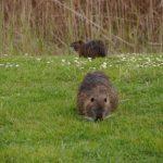 zwei tierische Gäste auf dem GC Grado
